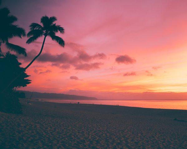 Sunset, beach, coconut tree